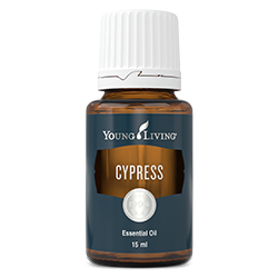 YL Cypress Essential Oil