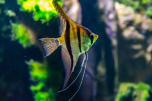 Essential Oils and Pet Safety - fish
