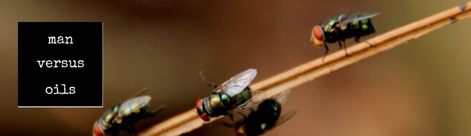 Essential Oils to Keep Bugs Away - Flies
