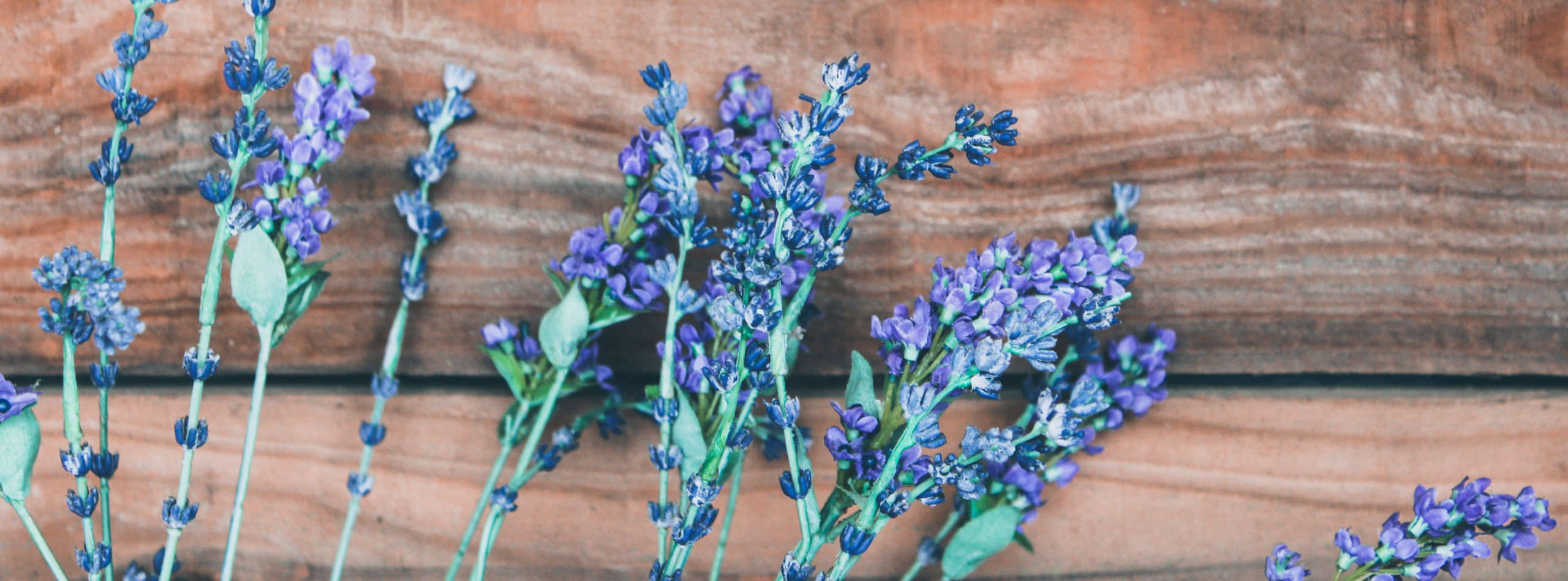 How Essential Oils Smell- lavender