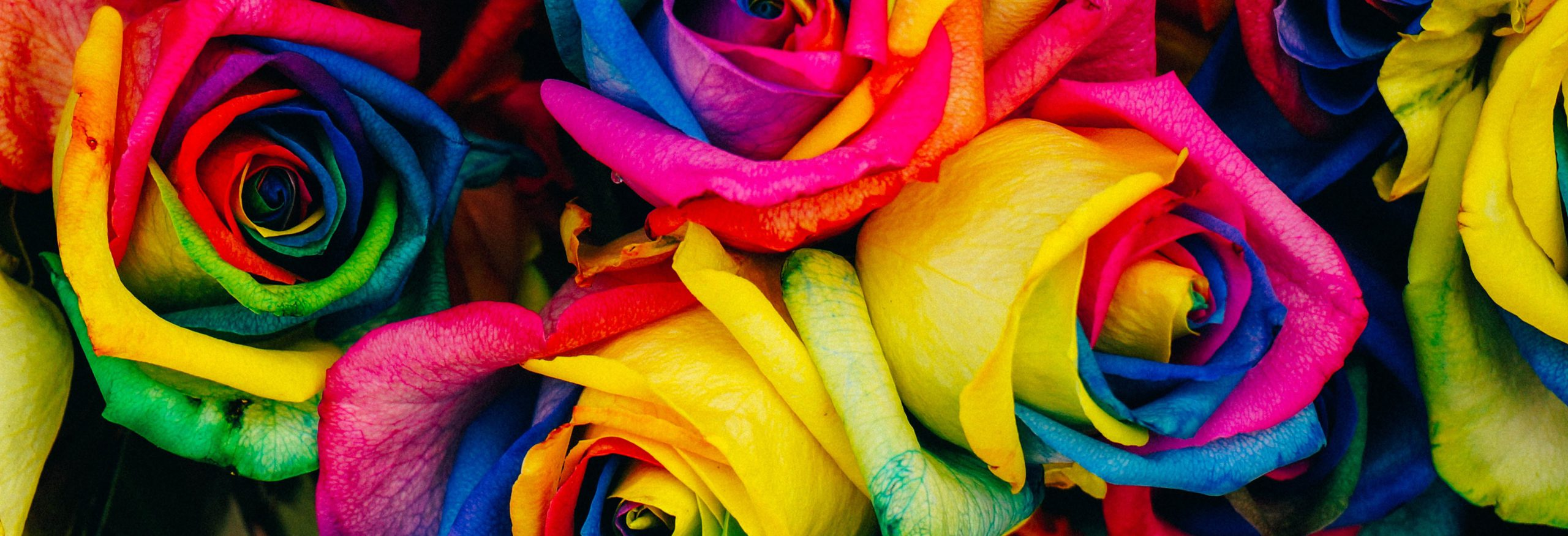 Rose Essential Oils For Men - coloured roses
